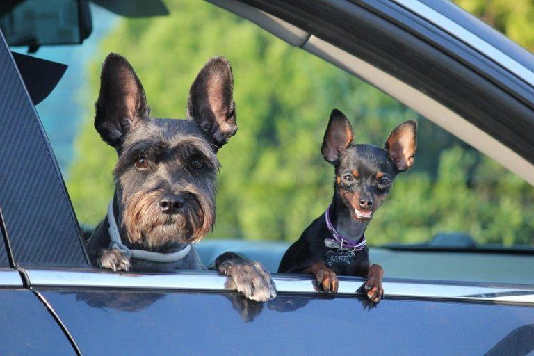 Wskazówki i porady dotyczące rozwiązywania problemów związanych z psem